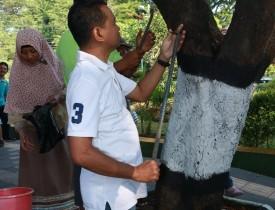 Cabut Paku (2)